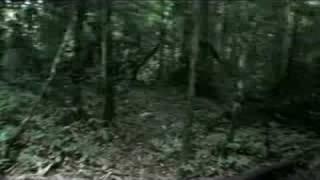 Scary Jungle Treking - Taman Negara, Malaysia
