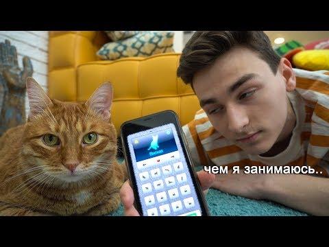общаюсь с котом через кошачий переводчик