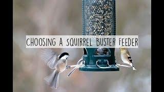 Choosing A Squirrel Buster Bird Feeder