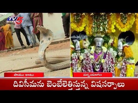 దివిసీమను బెంబేలెత్తిస్తున్న విషసర్పాలు | Krishna District | TV5 News