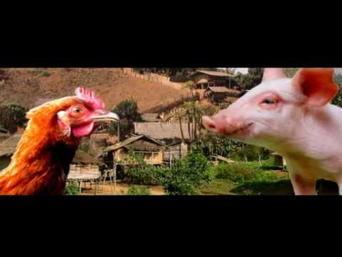 Pig Run (Hmong Short funny Film)