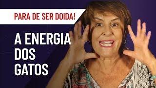 A ENERGIA DOS GATOS, NOSSOS PROTETORES ESPIRITUAIS | MARCIA FERNANDES | PARA DE SER DOIDA!