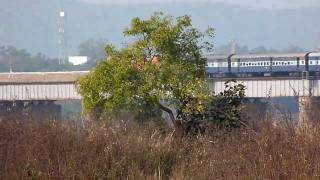 Howrah-Koraput Sambaleshwari Express goes over Mahanadi Bridge