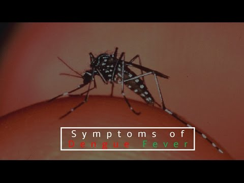 Dengue | Symptoms of Dengue | Symptoms of Dengue Fever