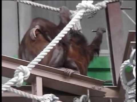 旭山動物園の動物たち(中画質)