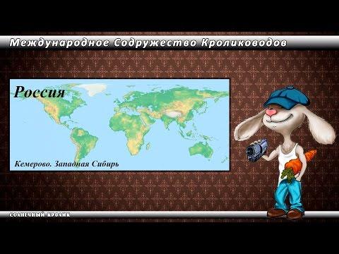 Кролики Кемерово. Западная Сибирь