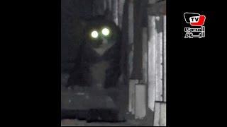 عم عبده مربي الـ٥٠ قطة يروي حكاية عنايته بقطة «محمد نجيب»