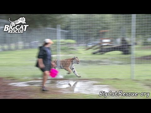 Daily Big Cat - 9-25-14 - Keisha Leaves Vacation Rotation