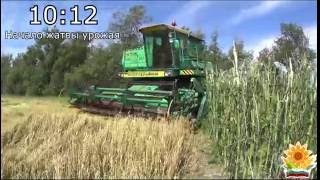Начало уборки урожая пшеницы 2016! ДОН-1500Б \ Start harvesting wheat in Russia 2016! DON-1500B