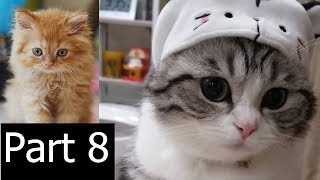 Little Kittens and Cute Cats Compilation 2018 Part 8 | Funny Pet Videos