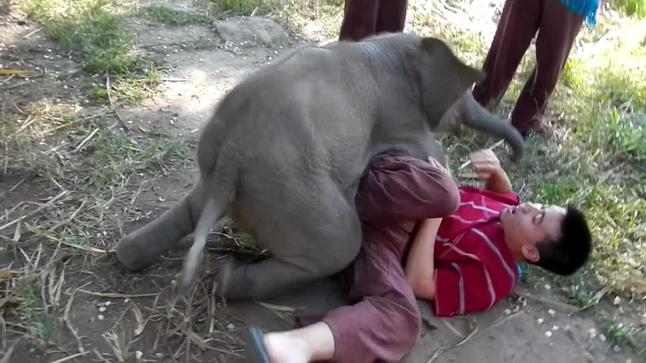 Baby Elephant Loves Cuddling with Arthur (Original) - YouTube