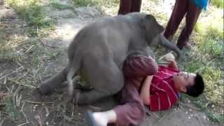 මෙන්න අලි හුරතල්..!! පොඩි ළමයෙක් වගේ..!! Baby Elephant Loves Cuddling with Arthur (Original)