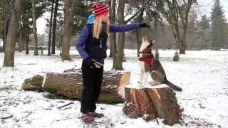 Pozytywne szkolenie - Positive Dog Training