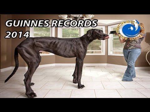 GUINNES RECORDS 2014