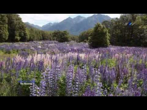 Alexandre Desplat - The Meadow