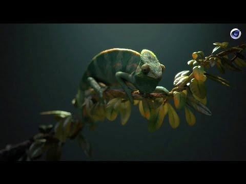 VERSUS: Using Cinema4D to bring animals alive in still lifes / Fred Huergo (ManvsMachine)