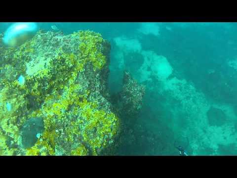 Freedive Spearfishing 40lb Wahoo- Grenada, West Indies
