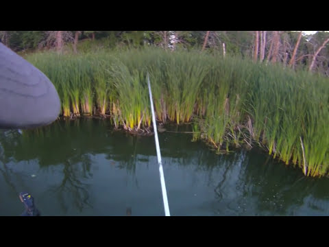 Shallow water bass in Minnesota
