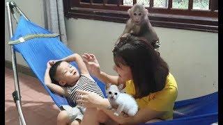 Baby Monkey   Monkey Doo And Cat Miu Play Happily With Family