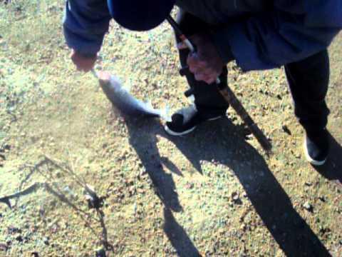 Fishing report - california aquaduct striper fishing Video