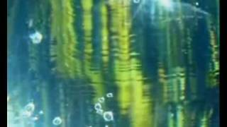 Watch Spirogyra Island video