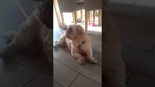 Ernie Many Tears Animal Rescue Dec 2018