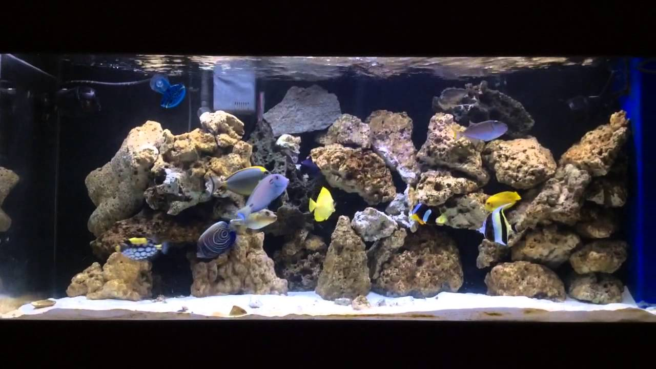 Saltwater fish only tank update 3 youtube for Fish only saltwater tank