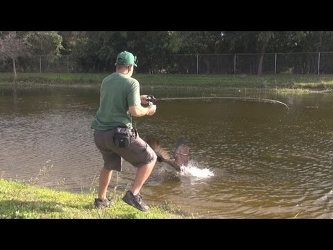 http://www.youtube.com/user/1fishEguy?feature=mhee This video is amazing ! While doing some bass fishing an osprey dive bombs on my hooked bass right at my feet ! I've never seen a hawk ,...