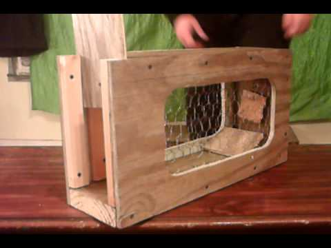 box trap catches rat and squirrel diy reviews