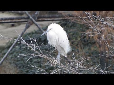 鳥の楽園 天王寺動物園 The Paradise of Birds in Tennoji Zoo