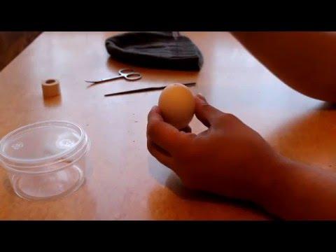 Как сделать гомункула своими руками 3
