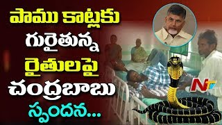AP CM Chandrababu Responds On Snakebite Cases | Orders to Supply Medicine In PHCs | NTV