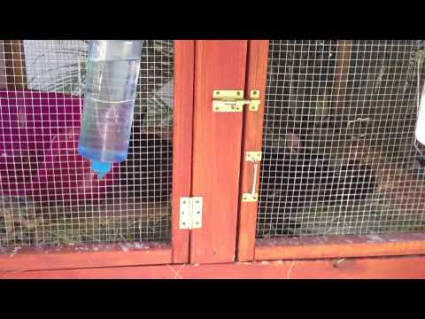 How to Build a Rabbit Hutch Part 2