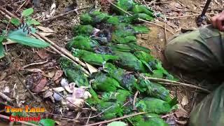 Yos hav zoov Nyob Nplog teb/ Hunting  In Laos 2018  Daim # 1