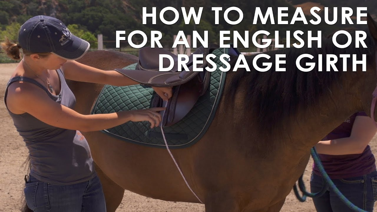 How To Measure Your Horse For English Amp Dressage Girth