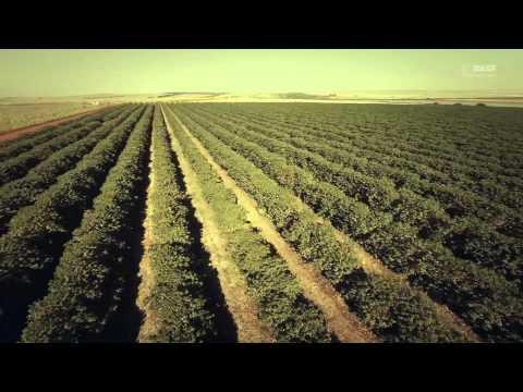 Agricultura o maior trabalho da Terra