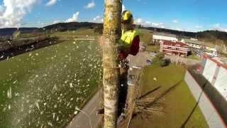 Baumkletterer - Tree climber