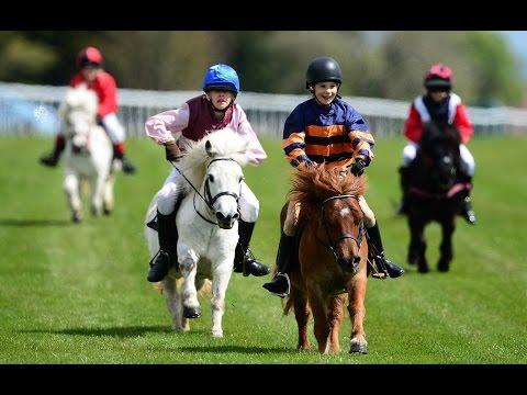 Shetland pony racing!