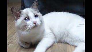 순하고 애교 많은 둘째 고양이 로키가 왔어요