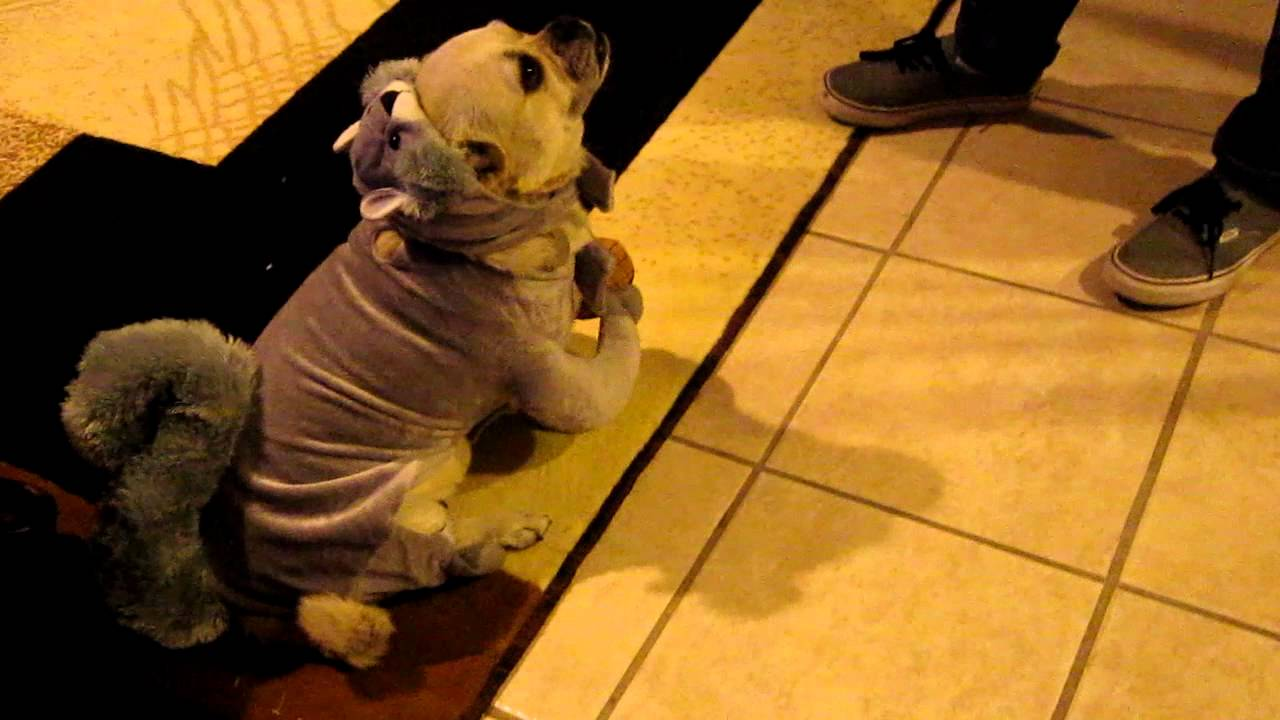Dog With Squirrel Costume