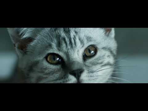 Curious Cats - Rain - Whiskas TV ad