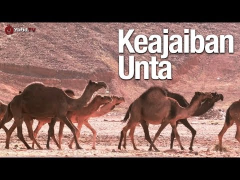 Keajaiban Unta, Sebuah Mukjizat Al-Qur'an - Ustadz Sufyan Baswedan, MA.