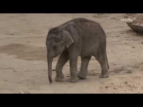 Sorgenkind Elefantenbaby