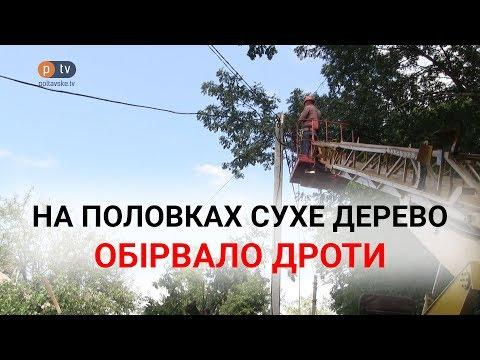 Сухе дерево, про яке неодноразово попереджали, обірвало дроти на Половках