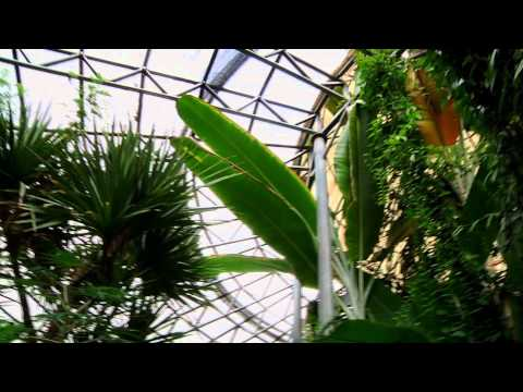 Jerusalem's Rainforest - The Conservatory, in Jerusalem Botanical Gardens