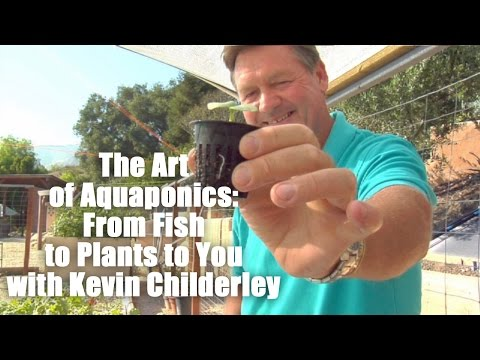 The Art Of Aquaponics  From Fish To Plants To You With Kevin Childerley