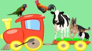 Suara binatang ternak | Pelajari nama dan suara binatang | Video lucu suara hewan