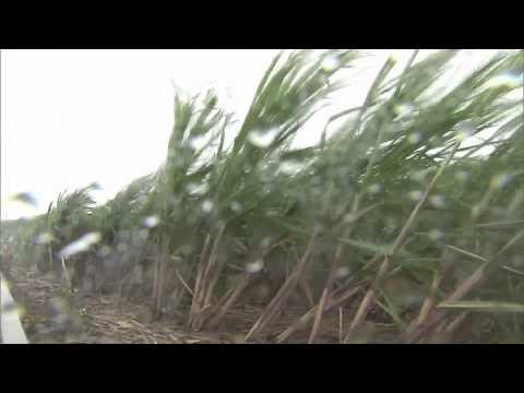 Seabees in Japan Prepare for Typhoon Neoguri
