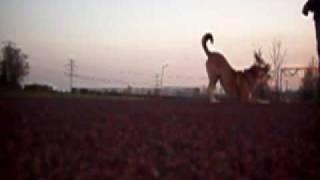 pozytywne szkolenie psów - Ukłon