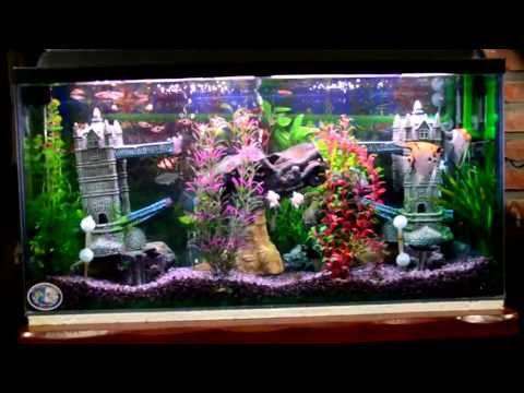 Mi acuario peces de aguas tropicales 150 litros HD (I) jab